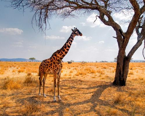 """Nairobis Nationalpark und Selbstfahrer-Rundreise """"Das Beste von Südafrika"""""""