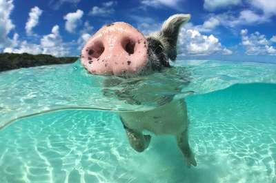 Descubre Miami, la ciudad mágica e ir a nadar con los cerdos de las Bahamas