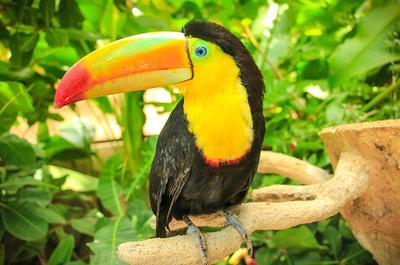 Regenwälder, Traumstrände & die Artenvielfalt Costa Ricas entdecken