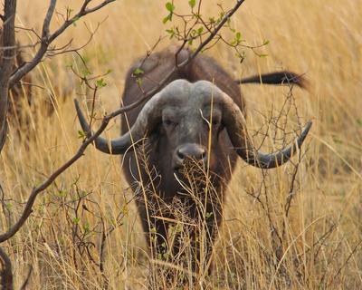"""Rundreise """"Das Beste von Südafrika"""" und Baden in Mosambik"""
