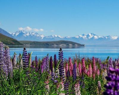 """Rundreise """"Neuseeland - Höhepunkte der Südinsel"""""""
