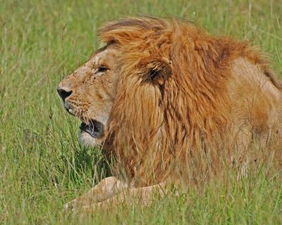 Kenya, Safari Kifaru 6D / 5N