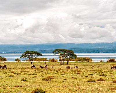 Kenya, Nairobi: 11 éjszaka 4 csillagos szállással és repjeggyel