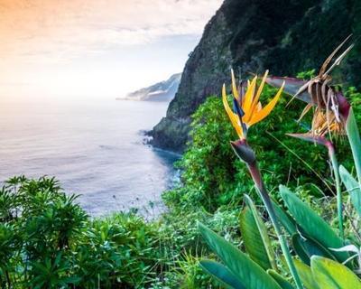 Egy hét Madeira márciusban szállással, repjeggyel