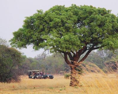 Südafrika Rundreise: Kruger Nationalpark, Kapstadt & Garden Route