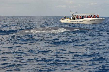 Halbtägige Wal- und Delfinbeobachtungstour