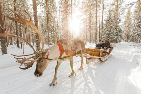 Rentierschlittenfahrt in Lappland und Husky-Safari von Rovaniemi aus