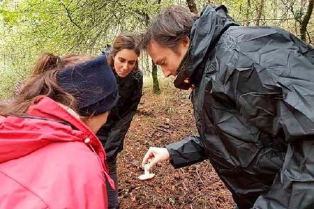 Ruta micológica en Cuenca