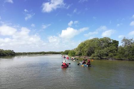 Ecoturismo en kayak por los manglares de holbox