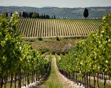Chianti Nord Wine Tour: Half Day